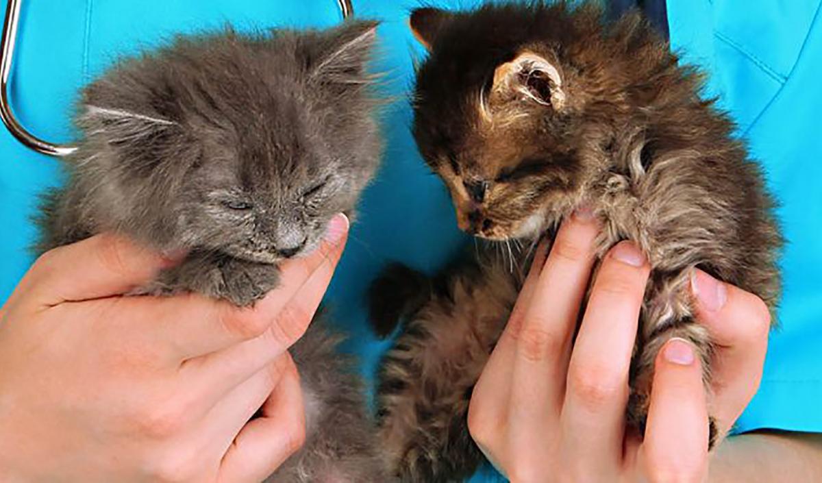 emergency-vet-for-cats