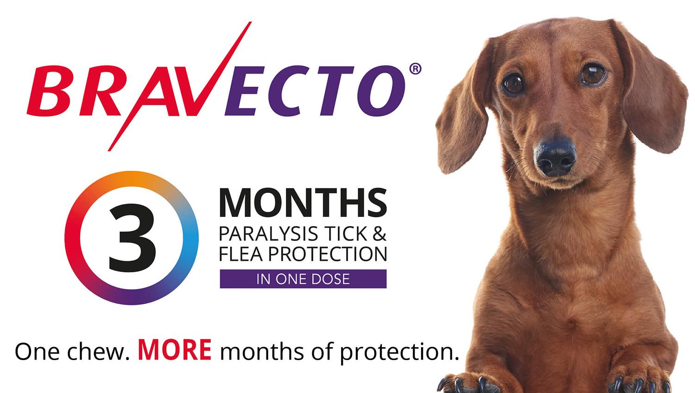 bravecto-pet-protection
