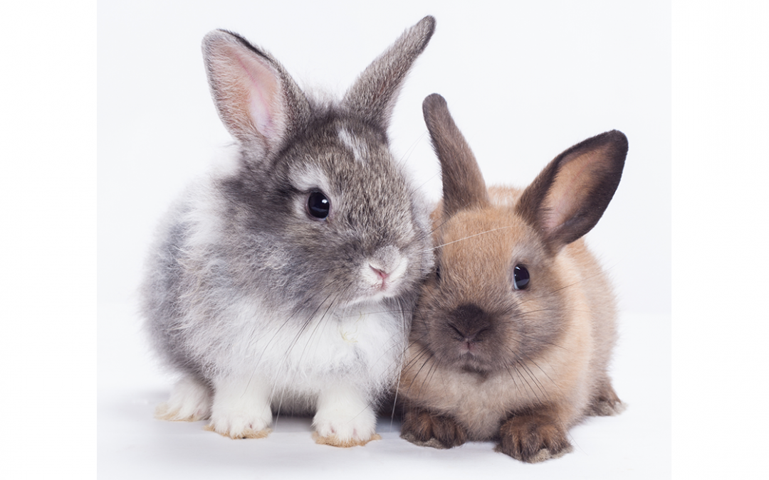 RABBITS: Handy Hints & Tips