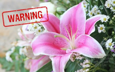 Beautiful Flower Toxic to Cats!