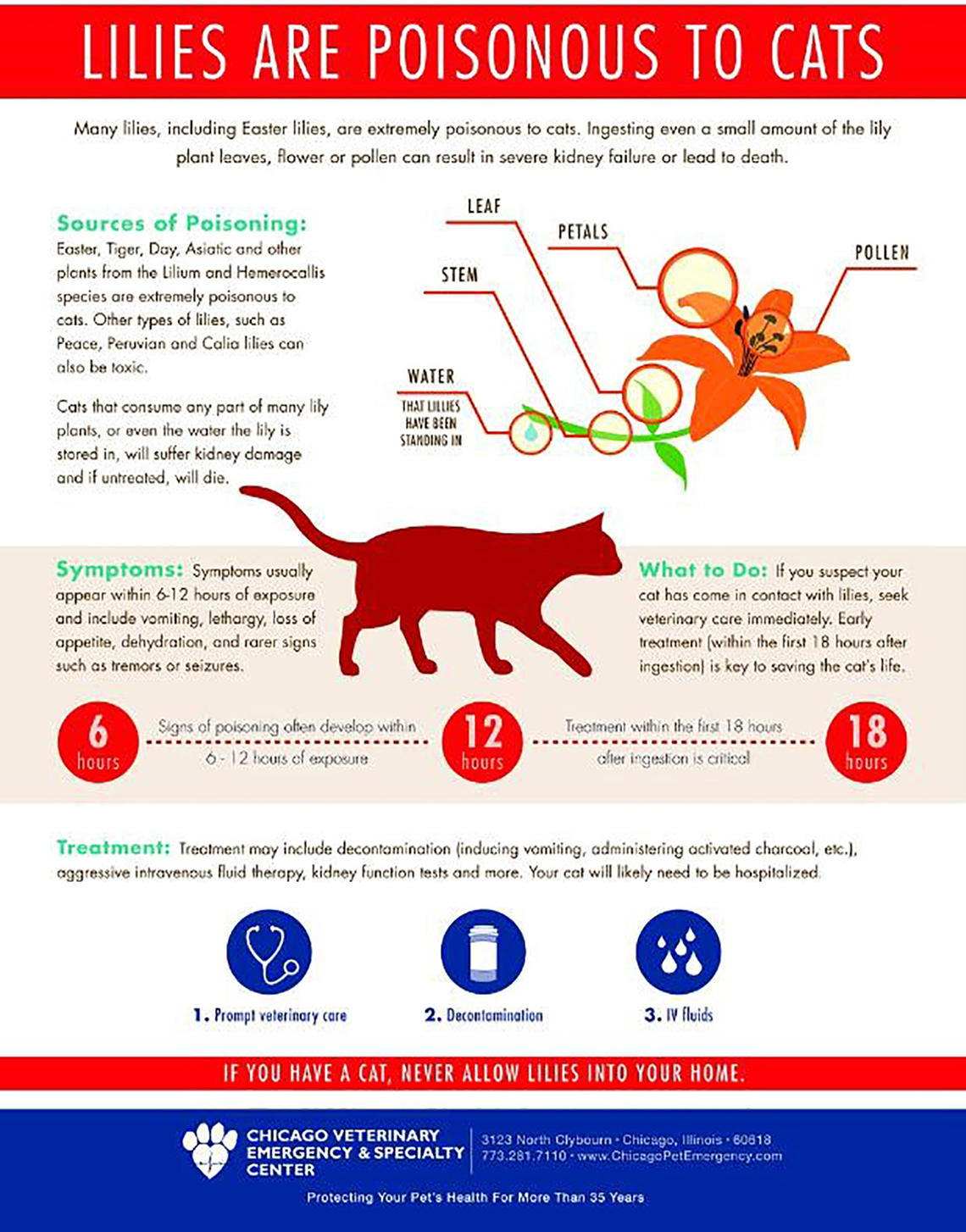 lilies-poisonous-to-cats