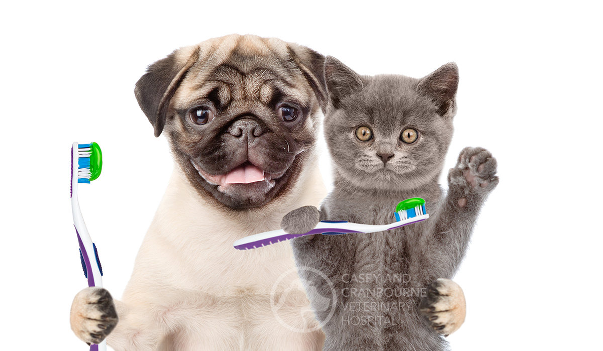 pet-dental-care-advice-melbourne
