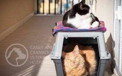 The Cat-Carrier Dilemma