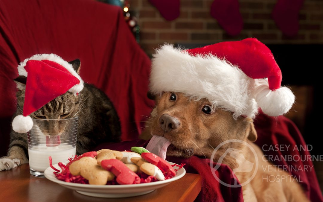 12 Common Dangers for Pets at Christmas!