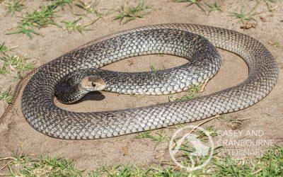 WARNING: Pets vs Snakes