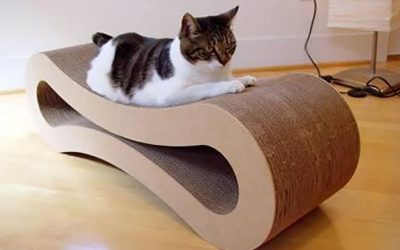 Indoor Enrichment for Cats