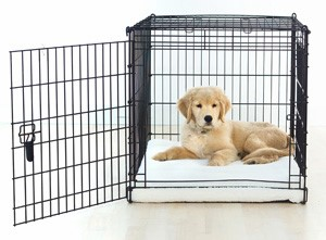 getting-a-puppy-used-to-a-crate