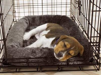 puppy-hates-his-crate