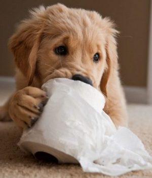puppy-training-schools-in-melbourne