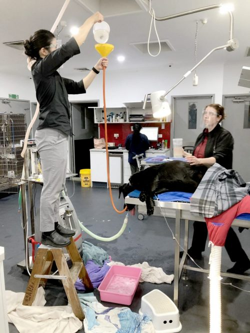 gastric-lavage-melbourne