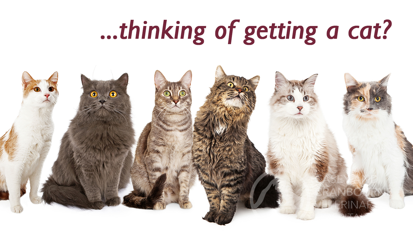 what-you-must-know-before-you-get-a-pet-cat