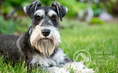 Is Your Dog Lethargic? Gaining Weight etc.?