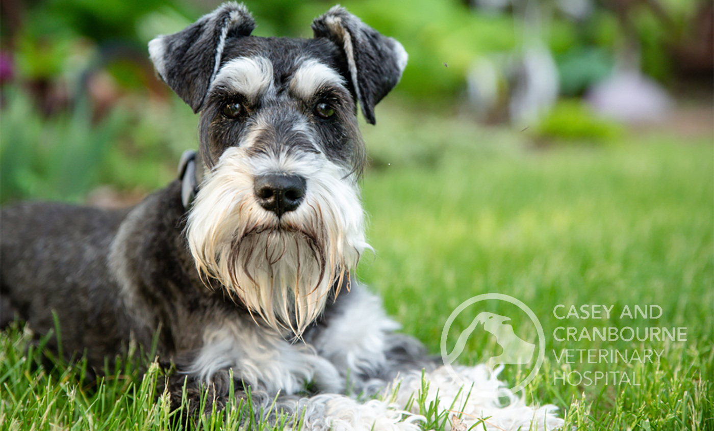 Dog-Hypothyroidism-Cure